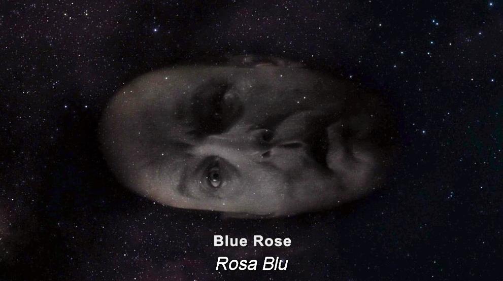 Briggs-blue-rose